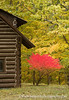 KAScott_20091025_9145b (Ken Scott) Tags: autumn red usa tree fall cabin michigan loghouse leelanau backpage kenscottphotography kenscottphotographycom