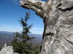 Old tree in closeup