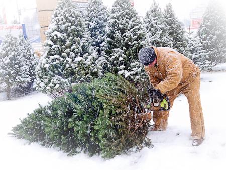 Christmas_Tree-9