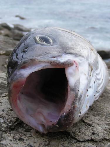 Resize of foto peixee