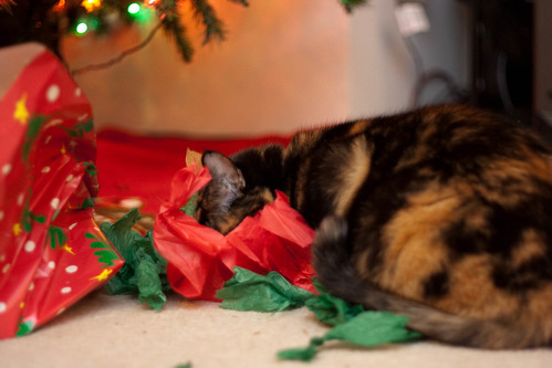 Christmas Catnip (1 of 11)