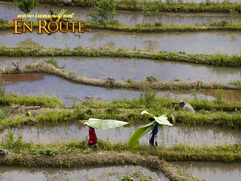 Batad Kids with leaves on the terraces