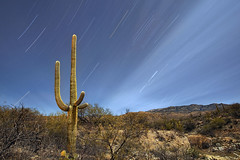 Saguaro and star trails (pics721) Tags: park wild arizona cactus sky usa black southwest west verde nature silhouette night landscape star view desert symbol dusk dry landmark trail national heat saguaro thorn barren bushes arid tanque
