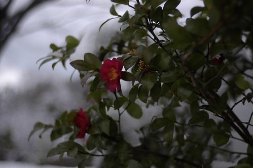 雪景色 5