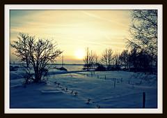 Śnieg jest bardzo piękny, czysty, niczym nieskalany... i zimny! Jak ręka anioła zemsty...
