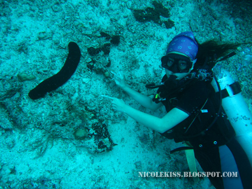 giant sea cucumber 2