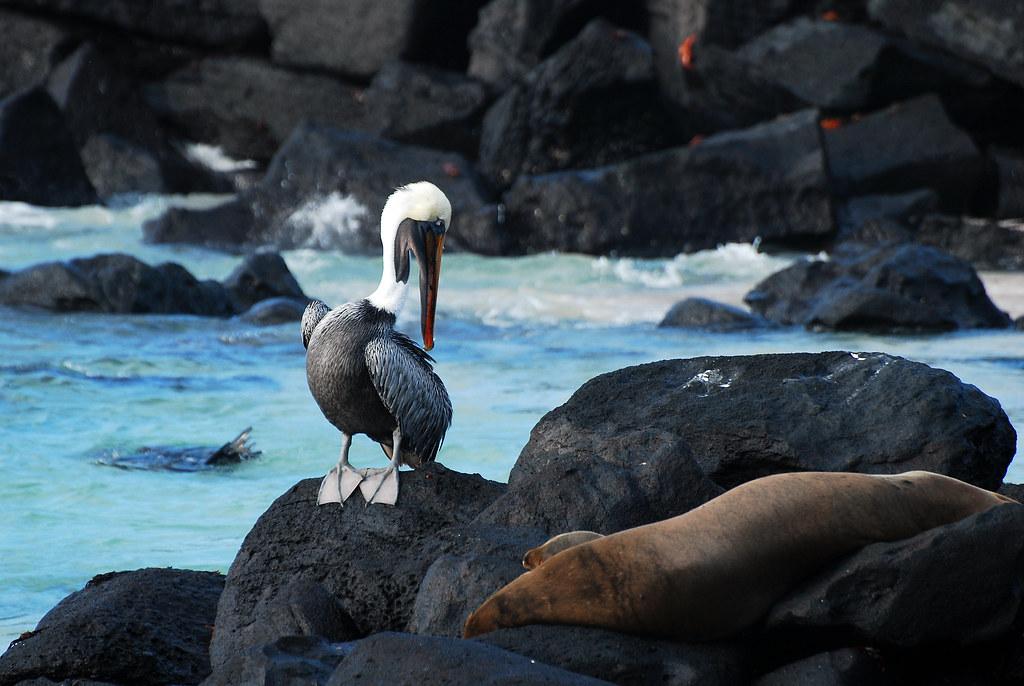 Galapagos Islands-334
