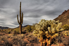 "In Search of Sunrise ""Arizona"" (Eye of the Storm Photography) Tags: arizona southwest tucson saguaro"