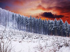 Heaven over Herdecke (CaddyB) Tags: light sky snow forest germany gold paw heaven award herdecke