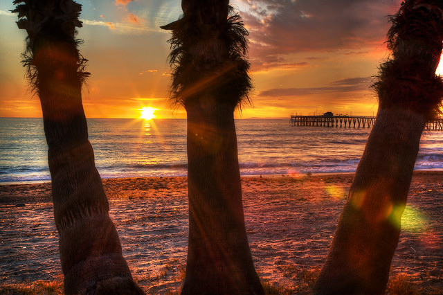 The Final Moment - San Clemente Palms at Sunset