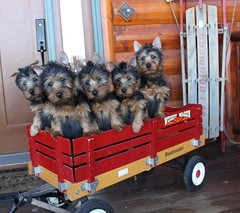 Benny, Cody, Gabby, Bea and Scout 1 (2)