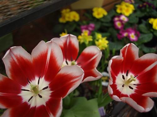 flowershop 031