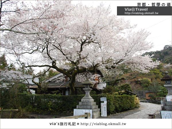 【via關西賞櫻行】京都賞櫻景點~哲學之道17