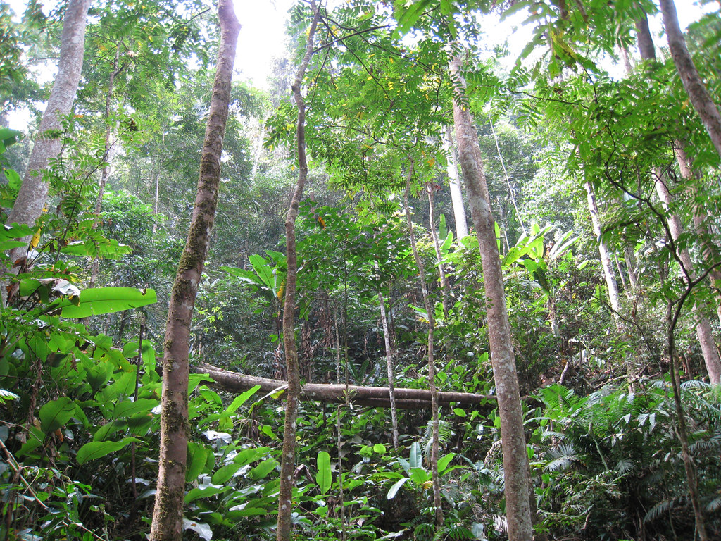 Forest scenery, Nam Ha protected area