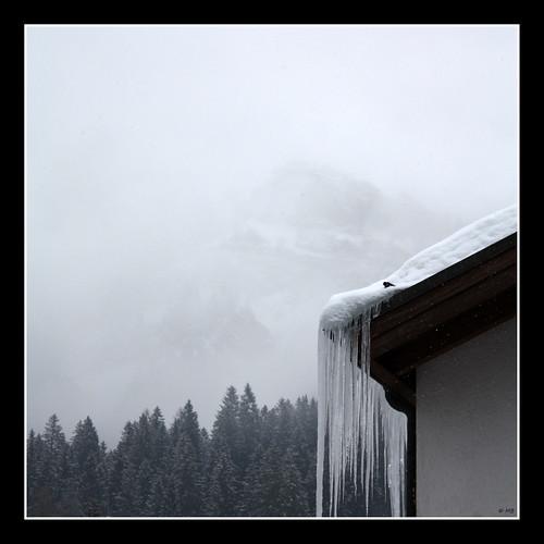 Snows #1