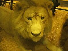 DSCF3567 (Phil D-UK) Tags: animals tring naturalhistorymuseum rothschild