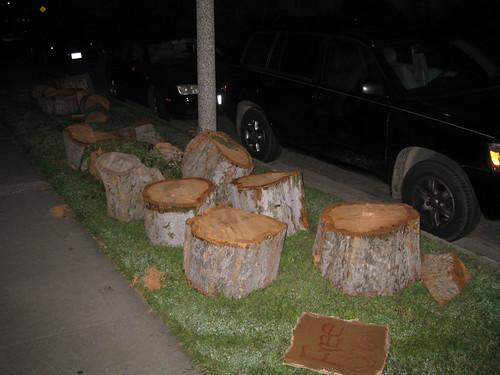 Chinese elm logs