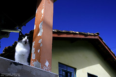 (Cristiano Caniche) Tags: animal brasil cat casa sp gato felino passeio caniche quilombo valedoparaiba fragmentos santoantoniodopinhal cristianocaniche viago bairrodoquilombo