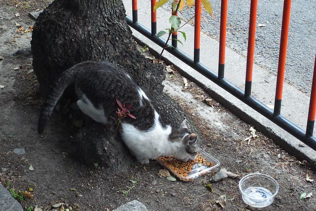 Today's Cat@2011-05-09