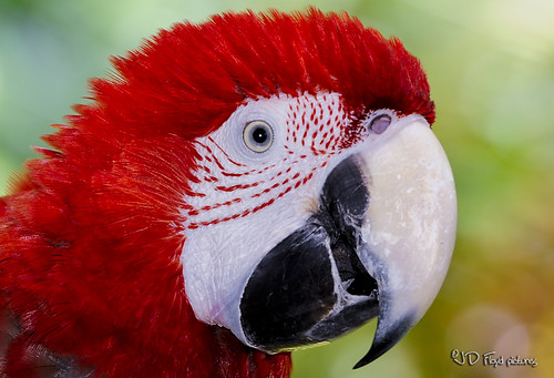 red parrot800x540