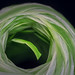 The Space In Between (brookis-photography) Tags: macromondays ball ribbon green white thespaceinbetween