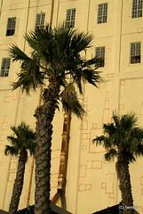 DSC04471 (benti.namibia) Tags: africa building industry silhouette wall southafrica industrial wand capetown palmtree afrika industrie palme gebäude südafrika vawaterfront mauer gebaeude kapstadt suedafrika victoriadocks industriell victoriaandalbertwaterfront