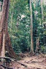 .Singapore (A.t.h.) Tags: trees singapore florafauna