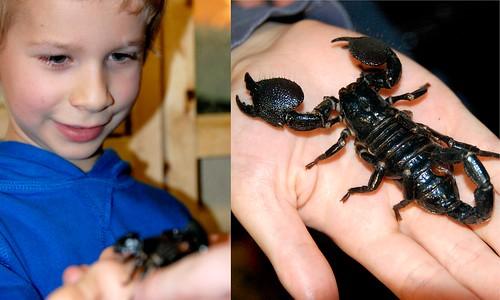 liam scorpion