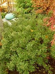 Daphne (boisebluebird) Tags: boise michaeltoolson boisebluebirdcom httpwwwboisebluebirdcom boiselandscaping boisegardener