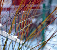 *~fence-friendly-friday~* (brightdawns) Tags: fence nikkorais50mmf12 forfencefriday agreenone withsomeyellowtwigsofabush quitecolourful thisisactuallysooc andnotcropped thatscalledtotaketheeasyway