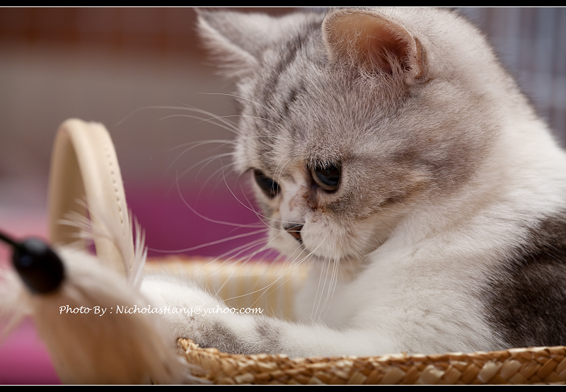 老姐買貓,我去拍貓