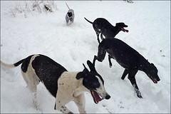 von Sylke Arnold:  Greys-im-Schnee