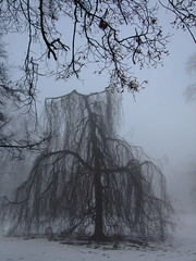 A Foggy Day (ho.ge) Tags: winter tree fog searchthebest 1001nights bestofthebest blueribbonwinner bej mywinners abigfave anawesomeshot theunforgettablepictures concordians goldstaraward urvision 1001nightsmagiccity mygearandmepremium