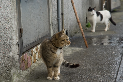 一個人趴趴走之侯硐貓城 (圖多)