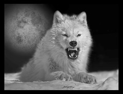 Wolf Moon (Johny Day) Tags: moon bravo native fullmoon firstnations lobo indians loup aboriginal nativeamericans americanindians nativeart powwow whitewolf indiens nativeamericanart autochtone wolfmoon aurora2 nativecanadians arcticwolf nativeamericanculture nativeamericanartwork mywinners nativeamericanindians canadianarcticwolf thomasclair aboriginalcanada firstnationsnativeart premiresnationsducanada firstnationsofnorthamerica indiendamerique nativeamericanindiansart imagesfornativeamericans