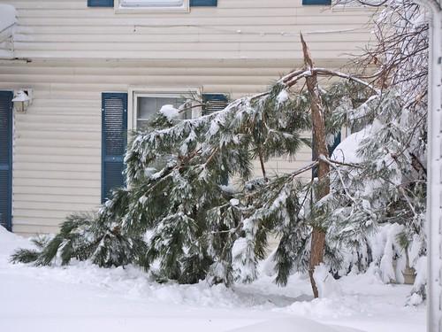 Tree snap