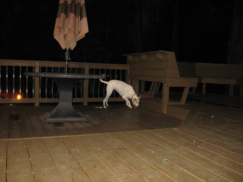 Crazy Jay playing with her ball last night.  My attempt at an action photo didnt turn out so well :(