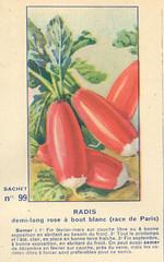 legume99 radis