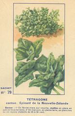 legume79 tetragone