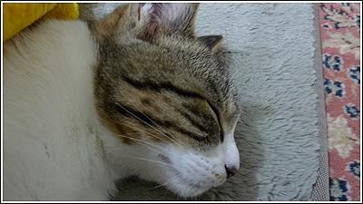 やっぱり寝ている猫が可愛い