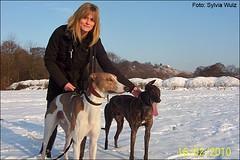 Windhunde-im-Schnee: sugar-saruman-heike