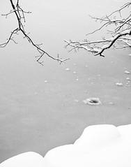 9451branchesice11x14 (Gotham22) Tags: newyorkcity centralpark blizzard rheingold bowbridge gapstow