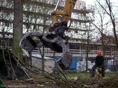 dg krokussen, sneeuwklokjes, populieren, bramen, sleedoren ect. (dietmut) Tags: trees bomen rotterdam nederland thenetherlands 2010 niederlande zuidholland hoogvliet panasoniclumix zalmplaat dmcfx500 zalmweidepark slooprooien maartmarch