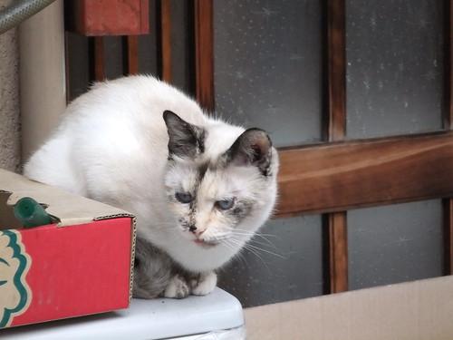 Today's Cat@2010-04-01