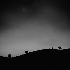 G P  ;  {}  B    |   Neighbours in different space (ayashok photography) Tags: trees bw tree evening blackwhite nikon hues bnw ooty 1x1 beforesunset cloudyday nikkor70300mm nikond40 ayashok dsc2435