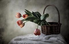 Cesta con tulipanes (JACRIS08) Tags:
