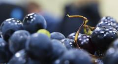 grape ([RUKA]NickeL) Tags: blue berry bokeh olympus e3 grape