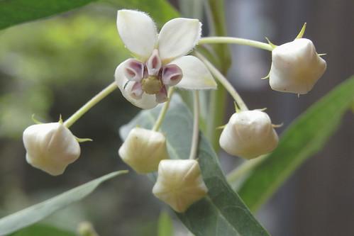 Flower-075