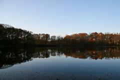 Autumn Reflections #3 (timsackton) Tags: autumn trees light plants reflection tree fall water pond unitedstates lexington massachusetts lexingtonres