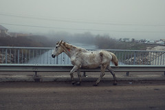 (i like it! what is it?) Tags: horse white market running flea strut cluj clujnapoca mangy onabridge oser daciangroza